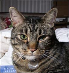 tigerseriousface